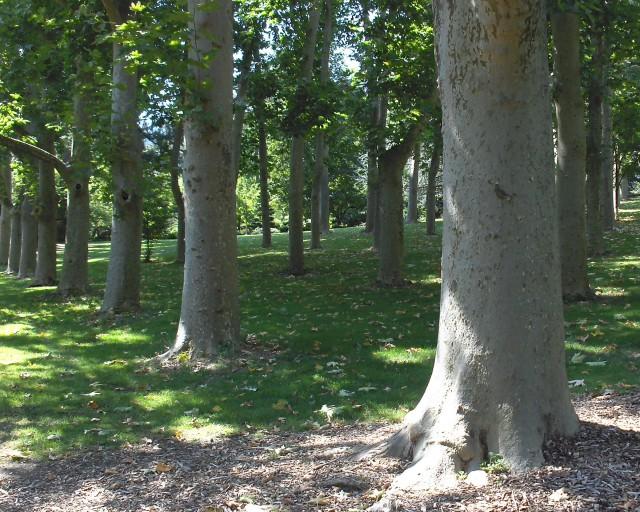 Lithia Park, Ashland.